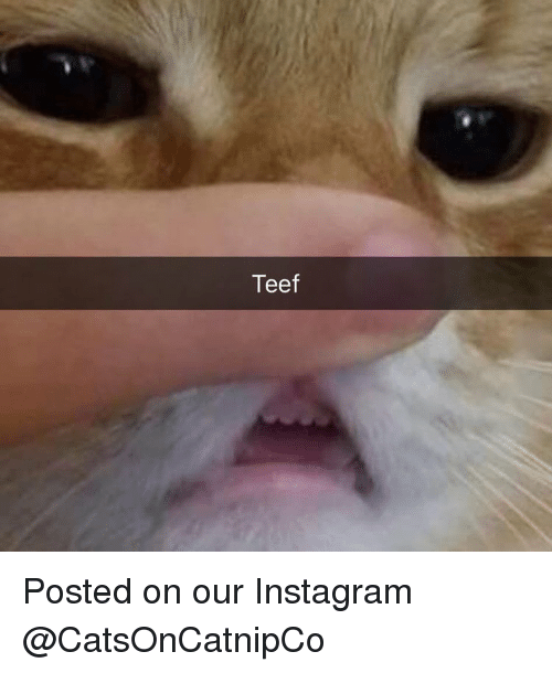 Instagram, Memes, and 🤖: Teef Posted on our Instagram @CatsOnCatnipCo