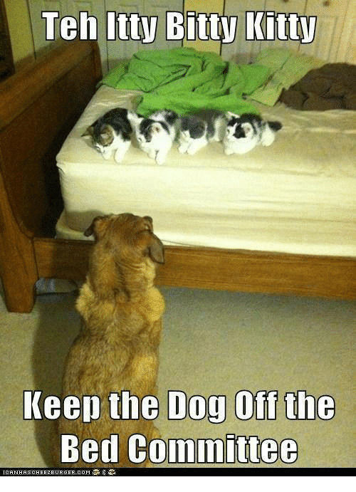 Bitties: Teh Itty Bitty Kitty  Keep the Dog Off the  Bed committee  ICANHASCHEEZEURGER.COM