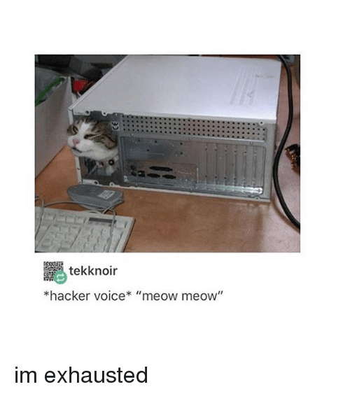 """Tumblr, Voice, and Hackers: tekk noir  *hacker voice* """"meow meow"""" im exhausted"""