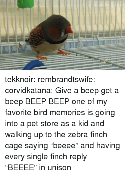 """Pet Store: tekknoir:  rembrandtswife:  corvidkatana:  Give a beep get a beep   BEEP BEEP  one of my favorite bird memories is going into a pet store as a kid and walking up to the zebra finch cage saying """"beeee"""" and having every single finch reply """"BEEEE"""" in unison"""