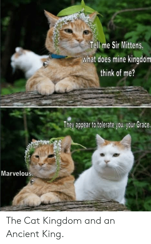 Marvelous: Tell me Sir Mittens  what does mine kingdom  think of me?  They appear to tolerate you your Grace.  Marvelous The Cat Kingdom and an Ancient King.