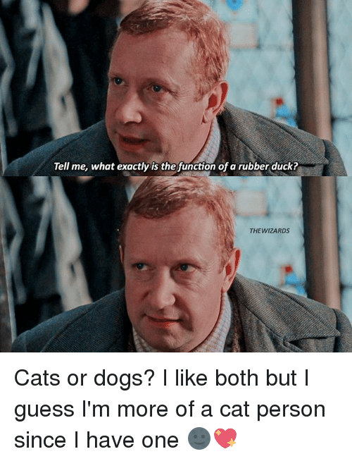 Cats, Dogs, and Memes: Tell me, what exactly is the function of a rubber duck?  THE WIZARDS Cats or dogs? I like both but I guess I'm more of a cat person since I have one 🌚💖