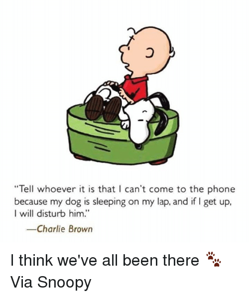 """Charlie, Memes, and Browns: """"Tell whoever it is that I can't come to the phone  because my dog is sleeping on my lap, and if I get up,  I will disturb him.'  -Charlie Brown I think we've all been there 🐾  Via Snoopy"""