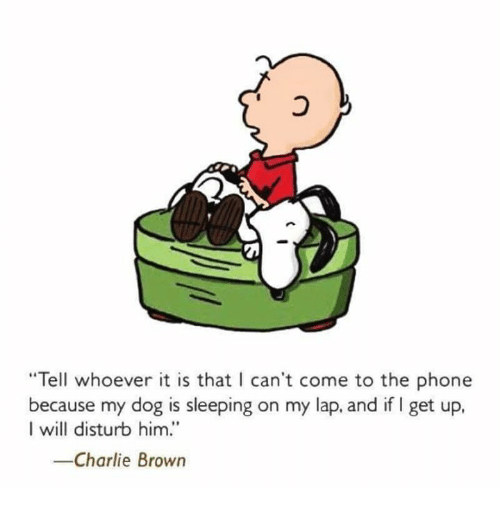 """Charlie, Memes, and Browns: """"Tell whoever it is that I can't come to the phone  because my dog is sleeping on my lap, and if l get up  I will disturb him.'  -Charlie Brown"""