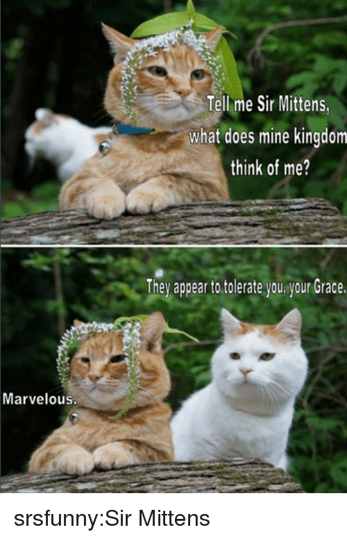 Marvelous: Tellme Sir Mittens,  what does mine kingdom  think of me?  They appear to tolerate you your Grace.  Marvelous. srsfunny:Sir Mittens