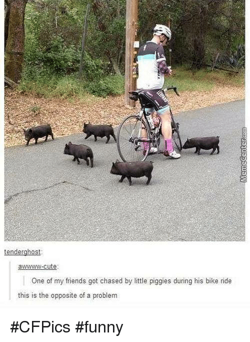 Bike riding: tenderghost:  awwwwww-cute  One of my friends got chased by little piggies during his bike ride  this is the opposite of a problem #CFPics #funny