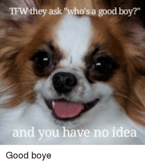 """Tfw, Good, and Boy: TFW they ask """"who's a good boy?""""  and you have no idea <p>Good boye</p>"""