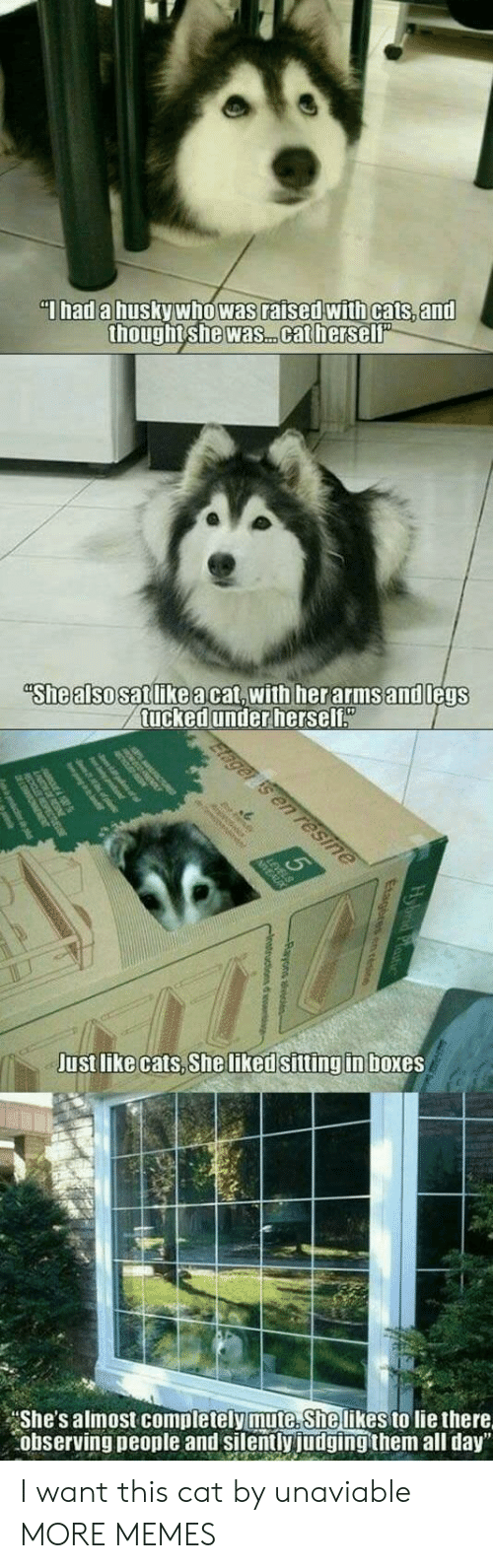 """Tucked: Thad a husky who was raised with cats, and  thought she was. .cat herself""""  """"She also satlikeacat,with herarmsand legs  tucked under herself""""  Elager is en resine  Just like cats, She liked sitting in boxes  She's almost completely mute. She likes to lie there  observing people and silently judging them all day"""" I want this cat by unaviable MORE MEMES"""