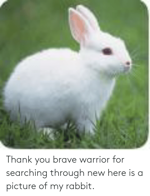 Searching: Thank you brave warrior for searching through new here is a picture of my rabbit.