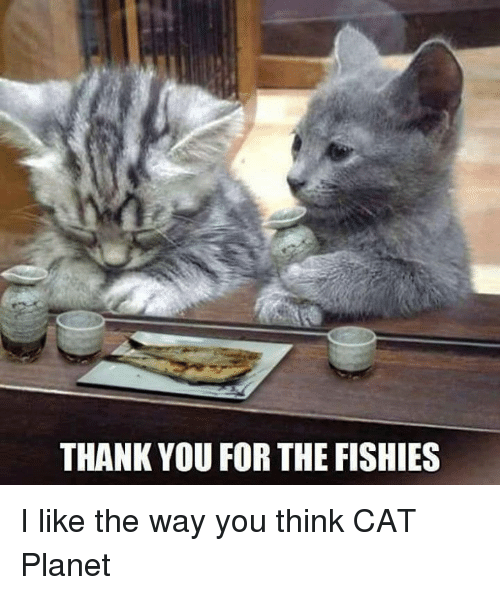 Thinking Cat: THANK YOU FOR THE FISHIES I like the way you think CAT Planet
