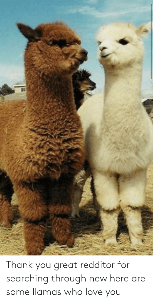Searching: Thank you great redditor for searching through new here are some llamas who love you
