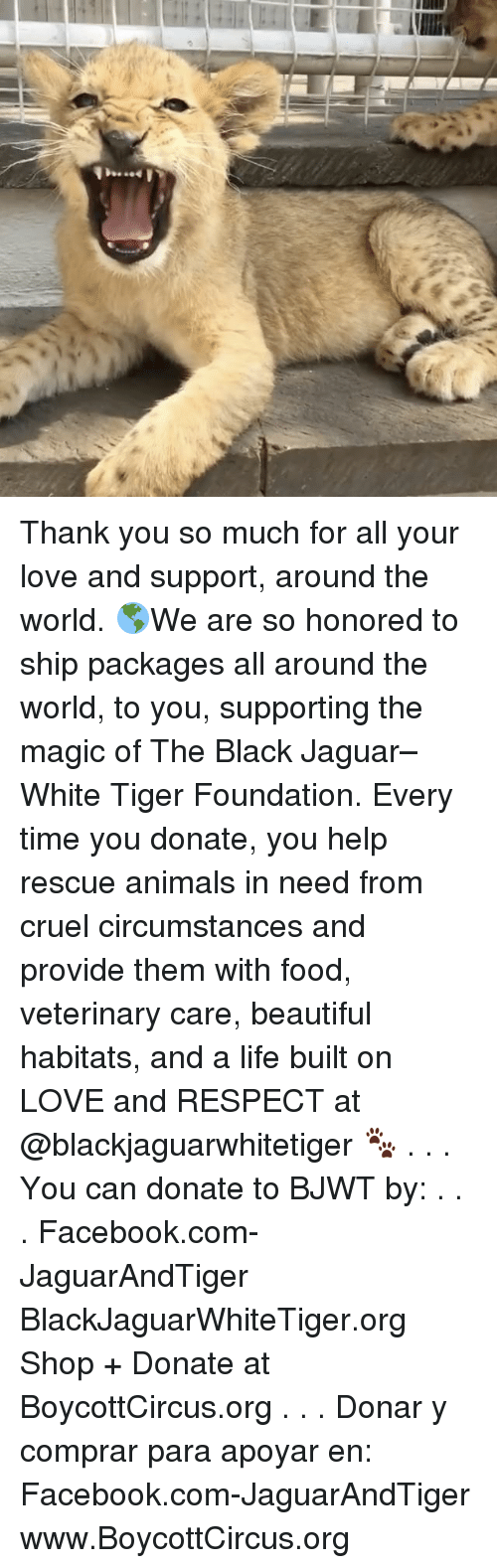 Whitnesses: Thank you so much for all your love and support, around the world. 🌎We are so honored to ship packages all around the world, to you, supporting the magic of The Black Jaguar–White Tiger Foundation. Every time you donate, you help rescue animals in need from cruel circumstances and provide them with food, veterinary care, beautiful habitats, and a life built on LOVE and RESPECT at @blackjaguarwhitetiger 🐾 . . . You can donate to BJWT by: . . . Facebook.com-JaguarAndTiger BlackJaguarWhiteTiger.org Shop + Donate at BoycottCircus.org . . . Donar y comprar para apoyar en: Facebook.com-JaguarAndTiger www.BoycottCircus.org