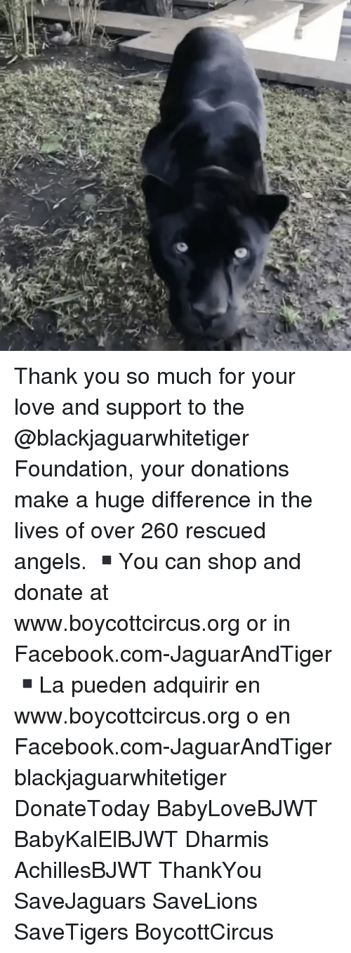 Memes, 🤖, and Make A: Thank you so much for your love and support to the @blackjaguarwhitetiger Foundation, your donations make a huge difference in the lives of over 260 rescued angels. ▪️You can shop and donate at www.boycottcircus.org or in Facebook.com-JaguarAndTiger ▪️La pueden adquirir en www.boycottcircus.org o en Facebook.com-JaguarAndTiger blackjaguarwhitetiger DonateToday BabyLoveBJWT BabyKalElBJWT Dharmis AchillesBJWT ThankYou SaveJaguars SaveLions SaveTigers BoycottCircus
