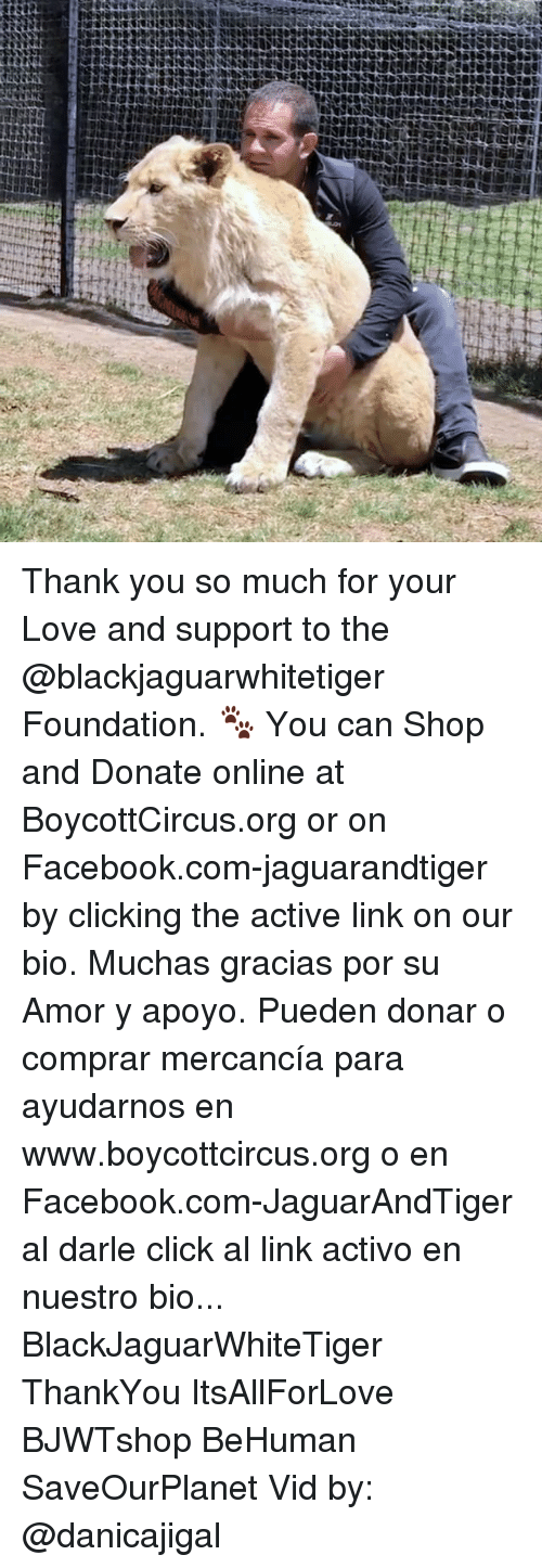Click, Facebook, and Love: Thank you so much for your Love and support to the @blackjaguarwhitetiger Foundation. 🐾 You can Shop and Donate online at BoycottCircus.org or on Facebook.com-jaguarandtiger by clicking the active link on our bio. Muchas gracias por su Amor y apoyo. Pueden donar o comprar mercancía para ayudarnos en www.boycottcircus.org o en Facebook.com-JaguarAndTiger al darle click al link activo en nuestro bio... BlackJaguarWhiteTiger ThankYou ItsAllForLove BJWTshop BeHuman SaveOurPlanet Vid by: @danicajigal