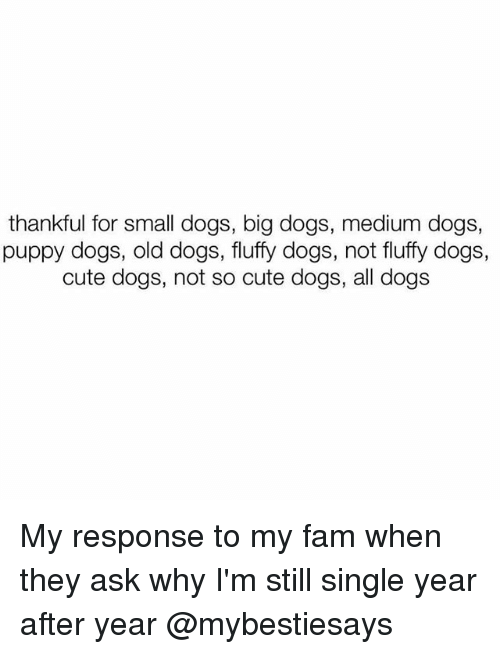 Cute, Dogs, and Fam: thankful for small dogs, big dogs, medium dogs,  puppy dogs, old dogs, fluffy dogs, not fluffy dogs,  cute dogs, not so cute dogs, all dogs My response to my fam when they ask why I'm still single year after year @mybestiesays