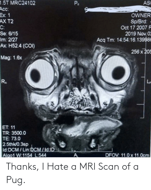 mri: Thanks, I Hate a MRI Scan of a Pug.
