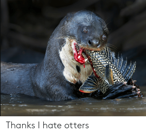 Otters: Thanks I hate otters