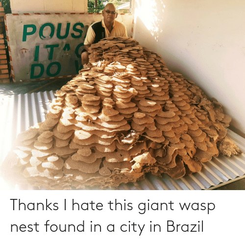wasp nest: Thanks I hate this giant wasp nest found in a city in Brazil