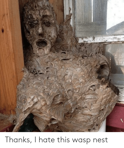 wasp nest: Thanks, I hate this wasp nest