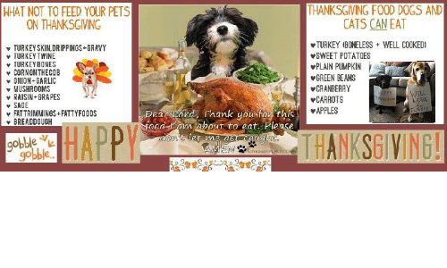 Can Dogs Eat Turkey Skin