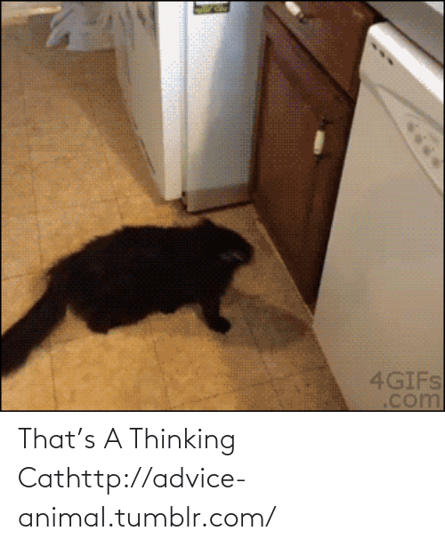 Thinking Cat: That's A Thinking Cathttp://advice-animal.tumblr.com/