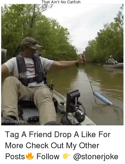 Catfished, Memes, and 🤖: That Ain't No Catfish  @streetvines Tag A Friend Drop A Like For More Check Out My Other Posts🔥 Follow 👉 @stonerjoke