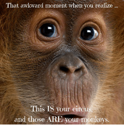 That Awkward Moment When You Realize: That awkward moment when you realize  This IS your circ  and those A  your monkeys