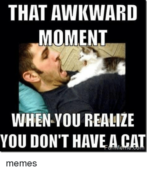 That Awkward Moment When You Realize: THAT AWKWARD  MOMENT  WHEN YOU REALIZE  YOU DON'T HAVE A CAT memes