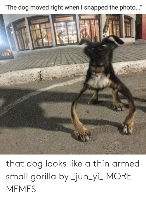 gorilla: that dog looks like a thin armed small gorilla by _jun_yi_ MORE MEMES