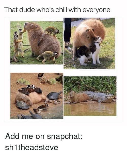 Dank Memes: That dude who's chill with everyone Add me on snapchat: sh1theadsteve