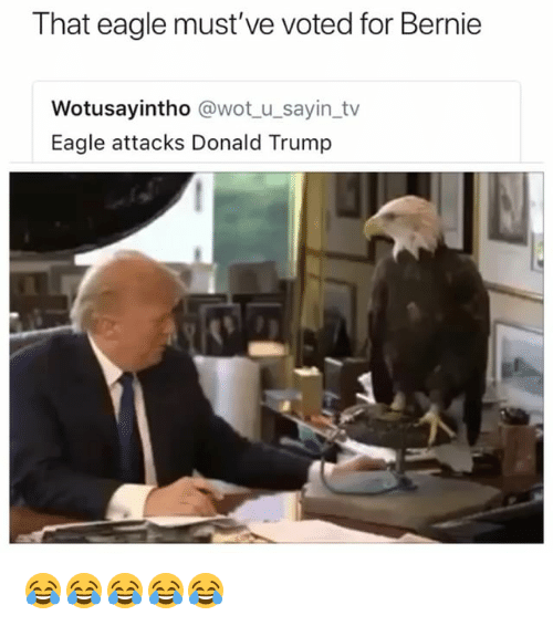 Donald Trump, Eagle, and Trump: That eagle must've voted for Bernie  Wotusayintho @wot u_sayin tv  Eagle attacks Donald Trump 😂😂😂😂😂