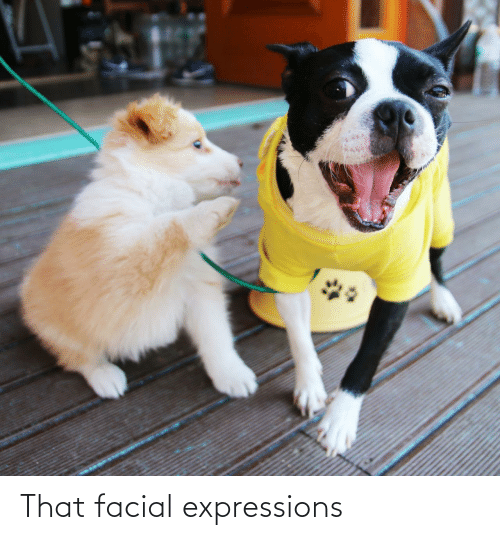 Expressions: That facial expressions