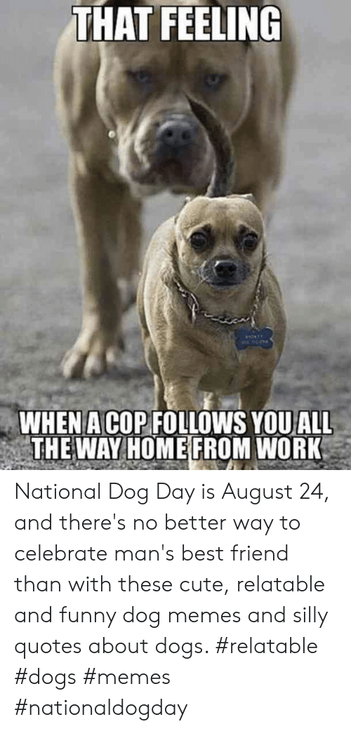 Silly Quotes: THAT FEELING  WHEN A COP FOLLOWS YOUALL  THE WAY HOME FROM WORK National Dog Day is August 24, and there's no better way to celebrate man's best friend than with these cute, relatable and funny dog memes and silly quotes about dogs.  #relatable #dogs #memes #nationaldogday