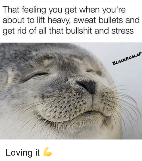 That Feeling You Get: That feeling you get when you're  about to lift heavy, sweat bullets and  get rid of all that bullshit and stress  ALAF  BLAC Loving it 💪