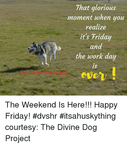 Friday, It's Friday, and Memes: That glorious  moment when you  realize  it's Friday  and  the work day The Weekend Is Here!!!  Happy Friday!  #dvshr   #itsahuskything courtesy: The Divine Dog Project