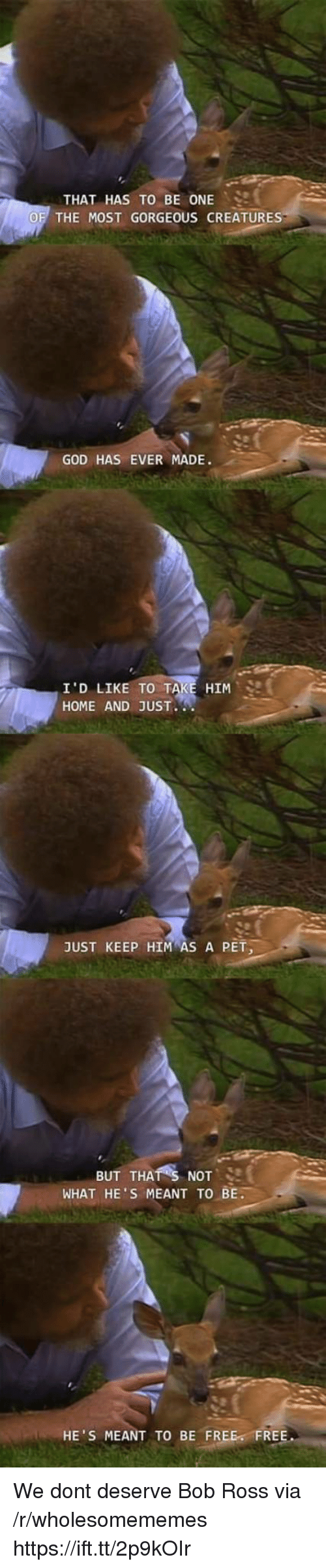 God, Bob Ross, and Free: THAT HAS TO BE ONE ..  THE MOST GORGEOUS CREATURE  GOD HAS EVER MADE.  HIM  I'D LIKE TO T  HOME AND JUST  JUST KEEP HIM AS A PET  BUT THATS NOT, SI  WHAT HE'S MEANT TO BE.  HE'S MEANT TO BE FREE FREE We dont deserve Bob Ross via /r/wholesomememes https://ift.tt/2p9kOIr