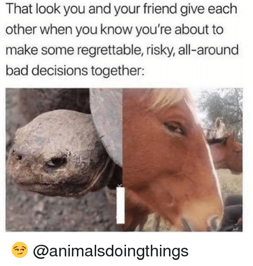 Bad, Dank Memes, and Regrettable: That look you and your friend give each  other when you know you're about to  make some regrettable, risky, all-around  bad decisions together: 😏 @animalsdoingthings