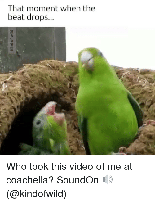 that moment when the beat drops who took this video 2153019 🔥 25 best memes about when the beat drop when the beat drop memes,Beat Drop Memes
