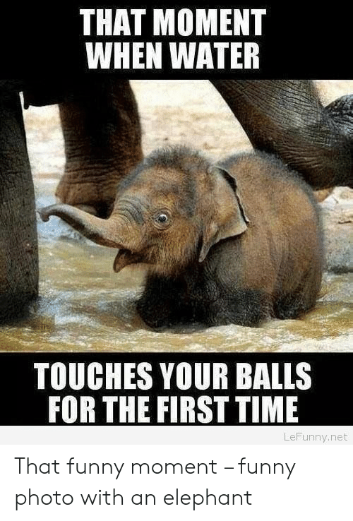Funny Moment: THAT MOMENT  WHEN WATER  TOUCHES YOUR BALLS  FOR THE FIRST TIME  LeFunny.net That funny moment – funny photo with an elephant