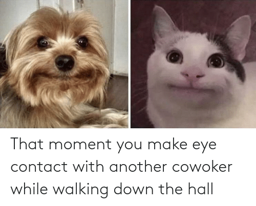 hall: That moment you make eye contact with another cowoker while walking down the hall