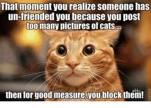 that moment you realize: That moment you realize Someone has  un-friended you because you post  too many pictures ofcatsE  then for good measure, you block them!