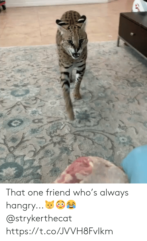 Friend Who: That one friend who's always hangry...🐱😳😂 @strykerthecat https://t.co/JVVH8FvIkm