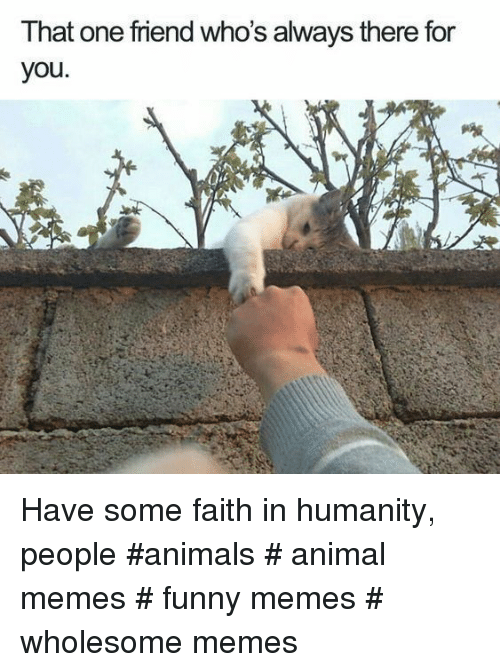 Wholesome Memes: That one friend who's always there for  you Have some faith in humanity, people #animals # animal memes # funny memes # wholesome memes