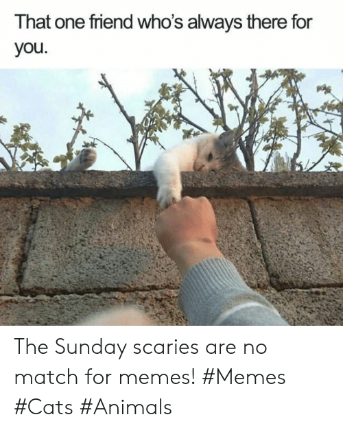 That One Friend: That one friend who's always there for  you The Sunday scaries are no match for memes! #Memes #Cats #Animals