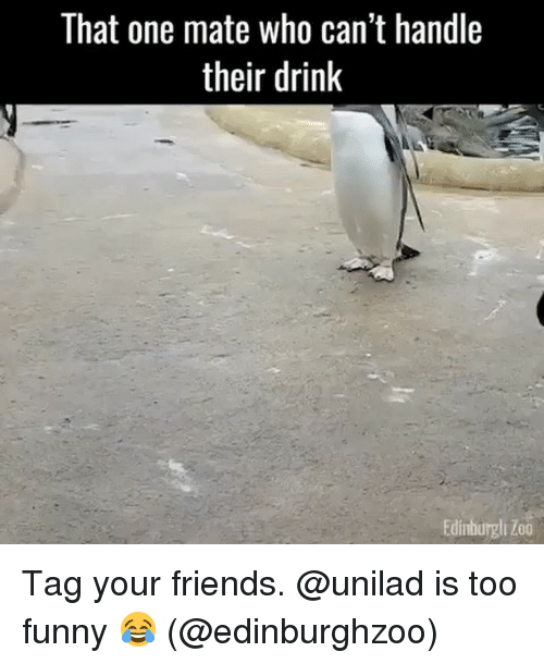 Friends, Funny, and Zoo: That one mate who can't handle  their drink  Edinburgli Zoo Tag your friends. @unilad is too funny 😂 (@edinburghzoo)