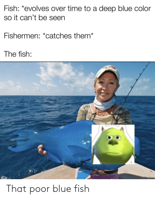 Fish: That poor blue fish