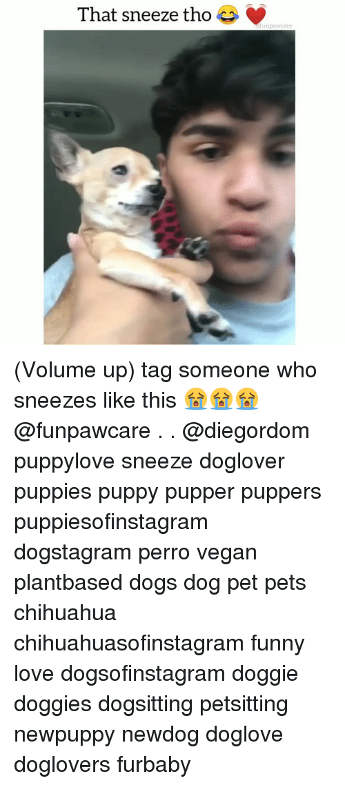 Volume Up: That sneeze tho  unpawcare (Volume up) tag someone who sneezes like this 😭😭😭@funpawcare . . @diegordom puppylove sneeze doglover puppies puppy pupper puppers puppiesofinstagram dogstagram perro vegan plantbased dogs dog pet pets chihuahua chihuahuasofinstagram funny love dogsofinstagram doggie doggies dogsitting petsitting newpuppy newdog doglove doglovers furbaby