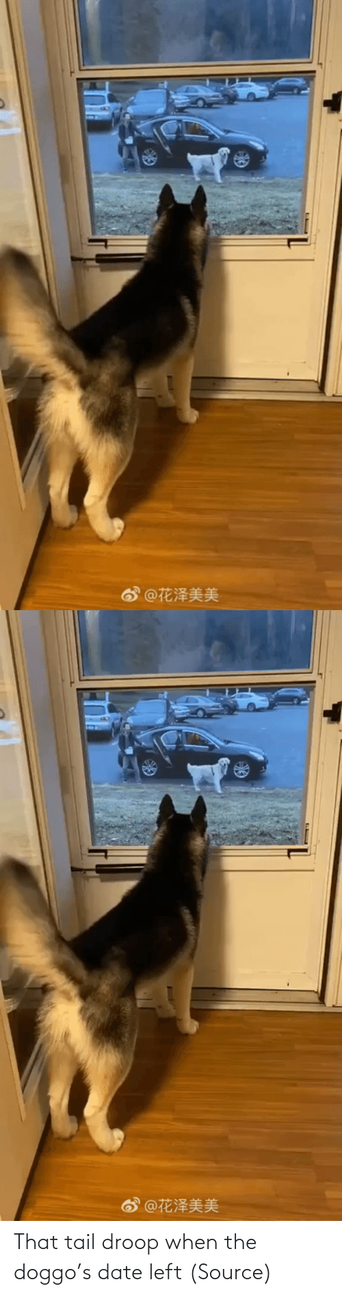 doggo: That tail droop when the doggo's date left (Source)