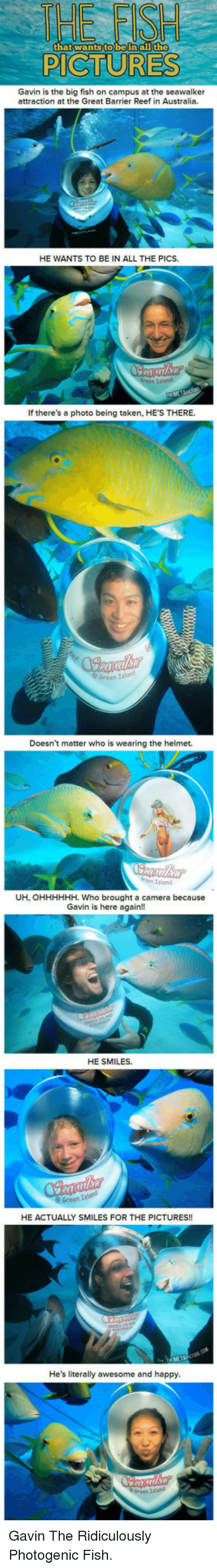 helmet: that wantsto beinall the  PICTURES  Gavin is the big fish on campus at the seawalker  attraction at the Great Barrier Reef in Australia.  HE WANTS TO BE IN ALL THE PICS.  If there's a photo being taken, HE'S THERE.  Green Island  Doesn't matter who is wearing the helmet.  Island  UH, OHHHHHH. Who brought a camera because  Gavin is here again!!  HE SMILES.  HE ACTUALLY SMILES FOR THE PICTURES!!  ME  He's literally awesome and happy  Green Island <p>Gavin The Ridiculously Photogenic Fish.</p>