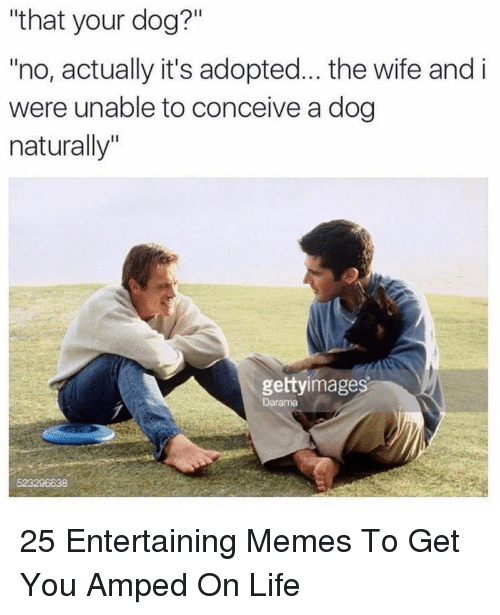 """amped: """"that your dog?""""  no, actually it's adopted... the wife and i  were unable to conceive a dog  naturally""""  gettyimages  Darama  523206638 25 Entertaining Memes To Get You Amped On Life"""